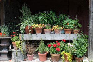 Containers! We use both annuals & perennials
