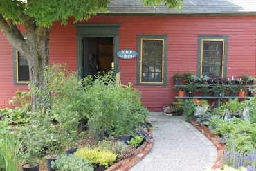 Our Native Plant Nursery Has Perennials Too!